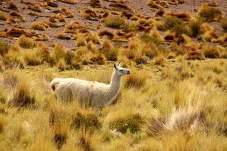 Bolivia017.jpg