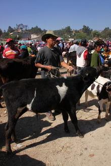 Guate011.jpg